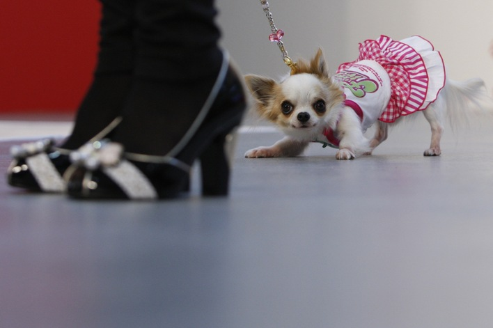 За кучетата и за модата