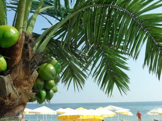 Посрещнете July Morning на плажа във Варна