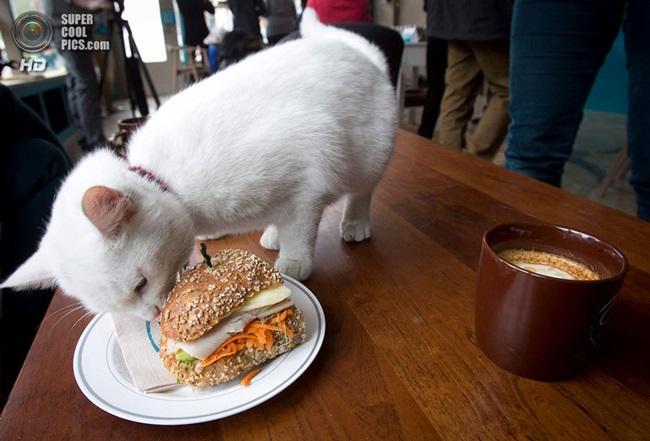 Котешкото кафене в Ню Йорк