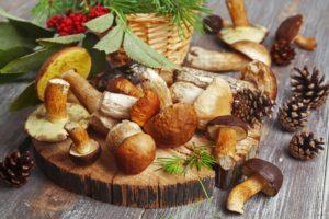 food-mushrooms-birch-white-cone-rowan-berries-red-nature-autumn-table-yum-yum-blur-bokeh-wallpaper