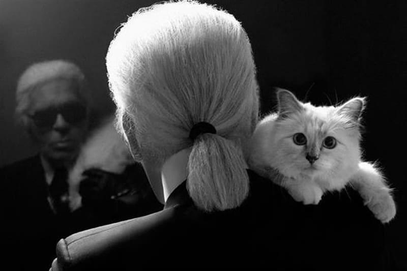 Шупет – необикновената история на една котка
